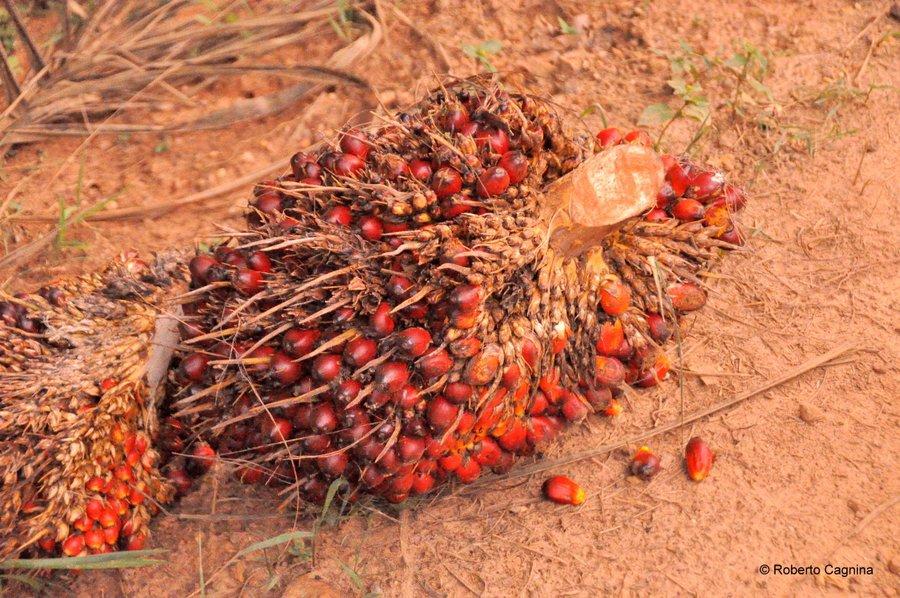 Cosa vedere in Ghana Togo e Benin olio di palma