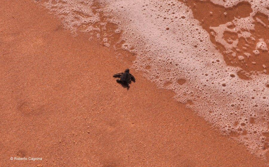 Cosa vedere in Ghana Togo e Benin uova di tartaruga e la corsa verso il mare