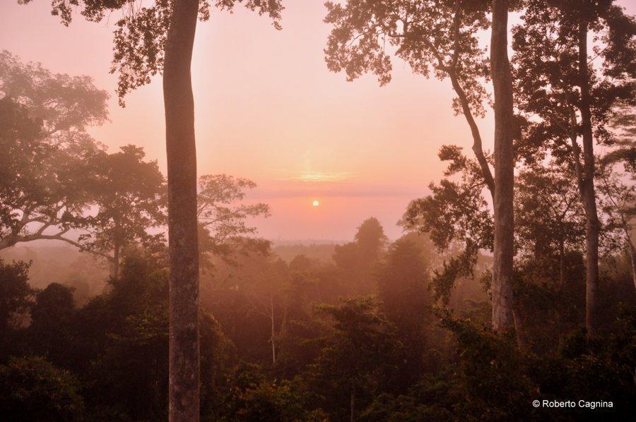 Cosa vedere in Ghana Togo e Benin dormire sull'albero alba foresta equatoriale