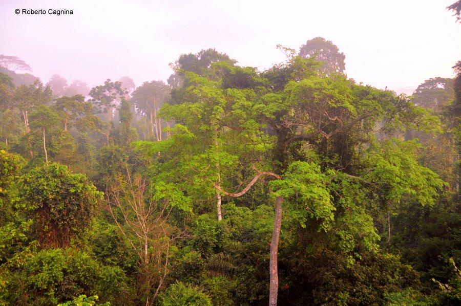 Cosa vedere in Ghana Togo e Benin dormire sull'albero nella foresta equatoriale