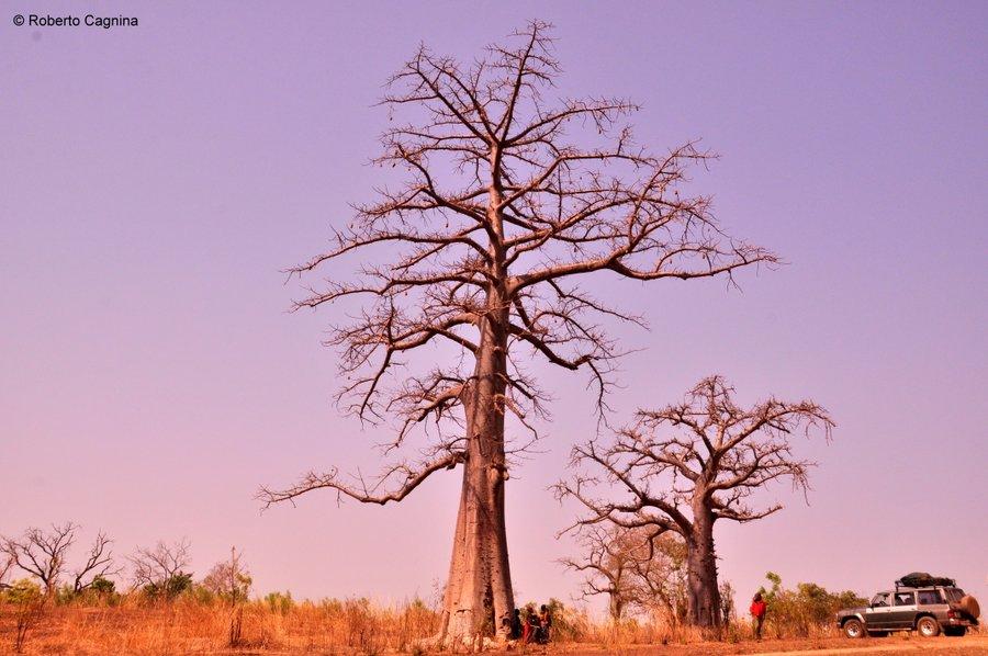 Organizzare il viaggio in Ghana Togo e Benin i grandi baobab