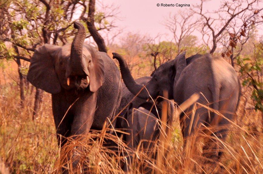 Organizzare il viaggio in Ghana Togo e Benin i safari
