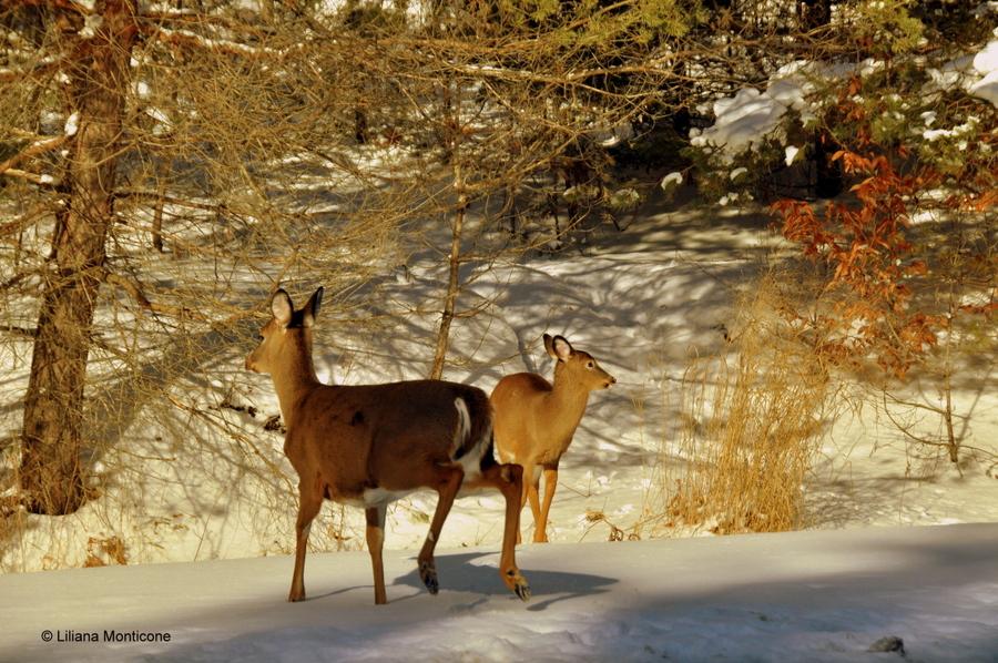 Canada on the road in inverno animali in libertà