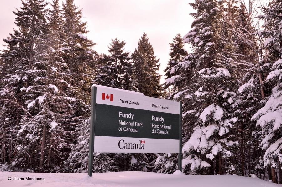 Canada on the road in inverno neve animali parchi nazionali