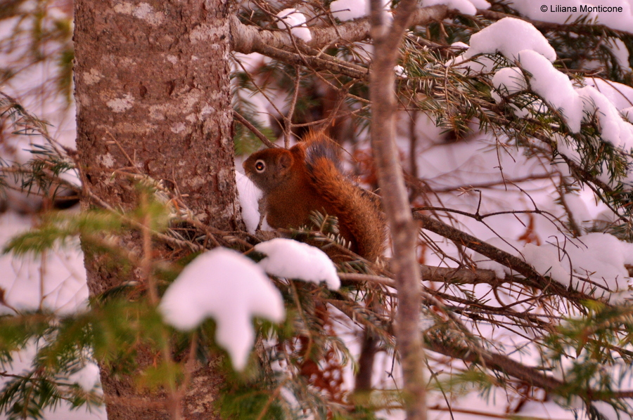 Canada on the road in inverno animali