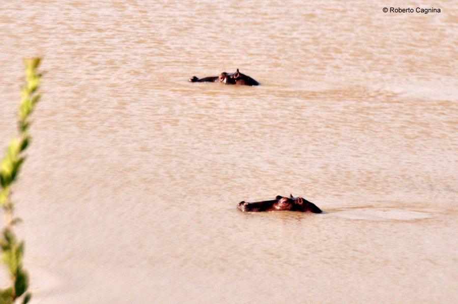 Cosa vedere in Ghana Togo e Benin safari parchi animali ippopotami