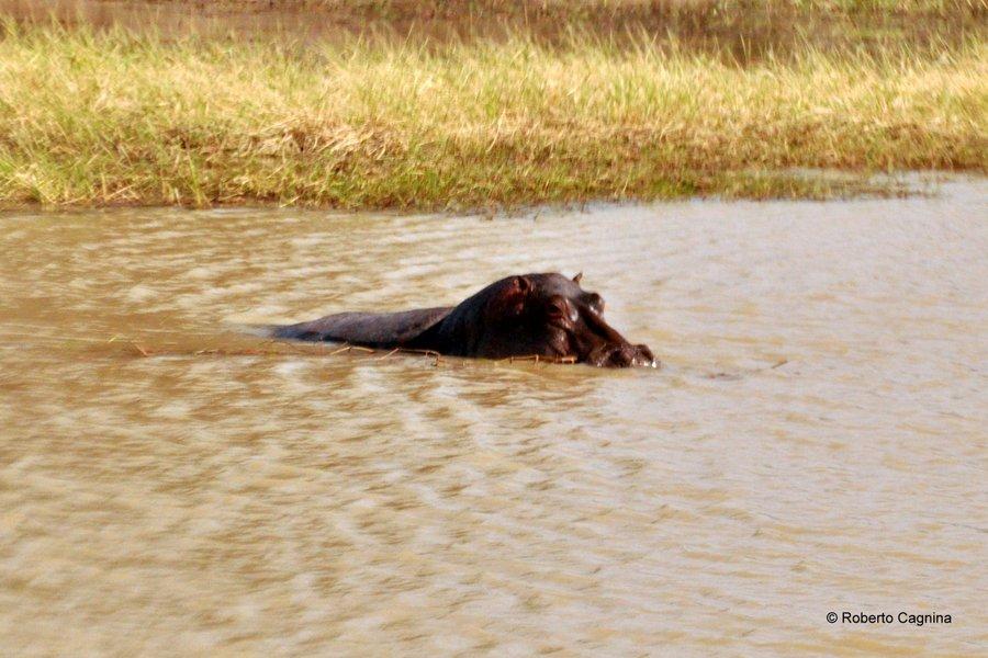 Cosa vedere in Ghana Togo e Benin safari parchi animali ippopotamo