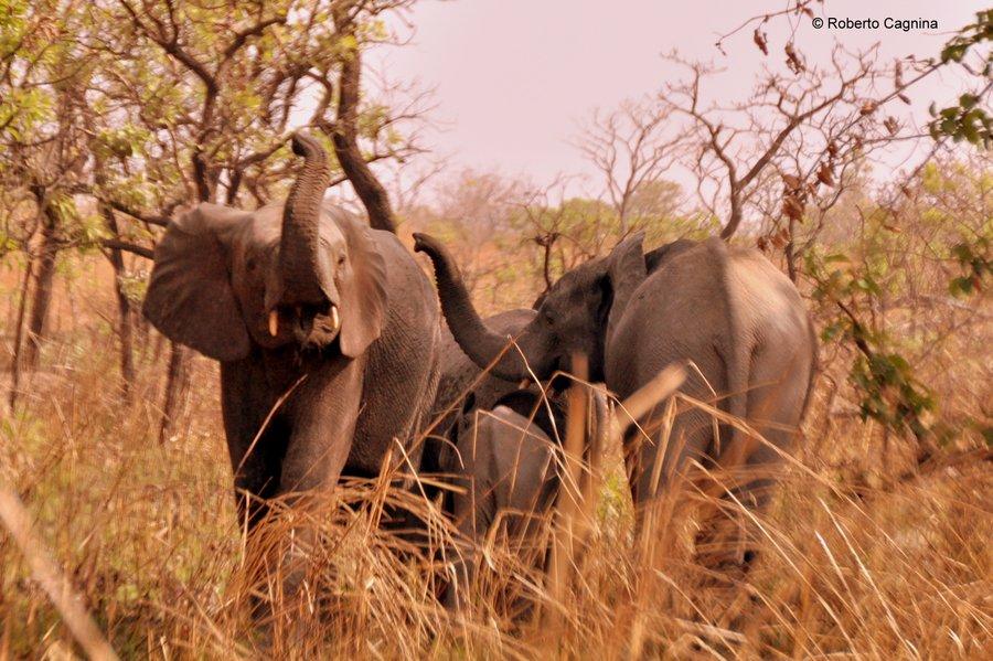 Cosa vedere in Ghana Togo e Benin safari parchi animali elefante