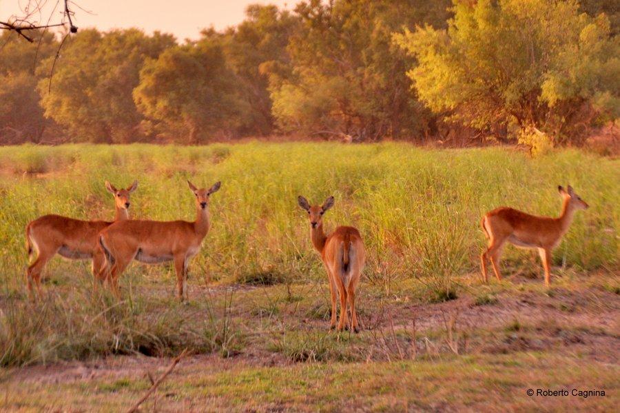 Cosa vedere in Ghana Togo e Benin safari parchi animali gazzelle