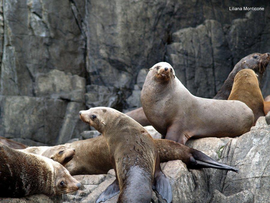 viaggio australia foche leoni marini