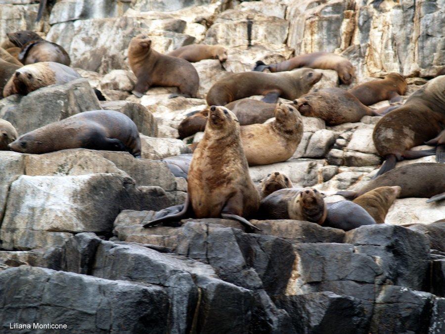 viaggio australia animali foche leoni marini