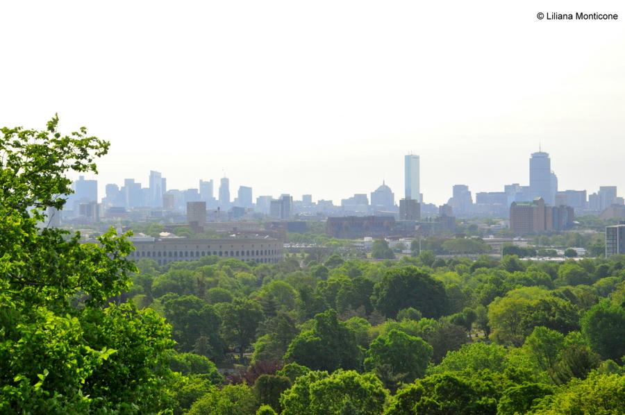 Cosa vedere a Boston Mount Auburn Cemetery skyline di Boston
