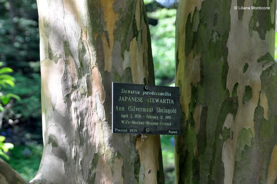 Cosa vedere a Boston Mount Auburn Cemetery natura e tranquillità