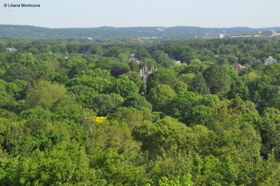 Cosa vedere a Boston Mount Auburn Cemetery dall'alto della torre
