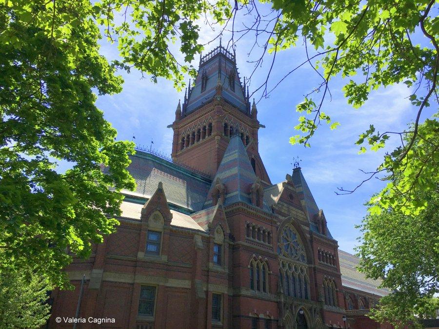 cosa vedere a boston harvard museo di storia naturale