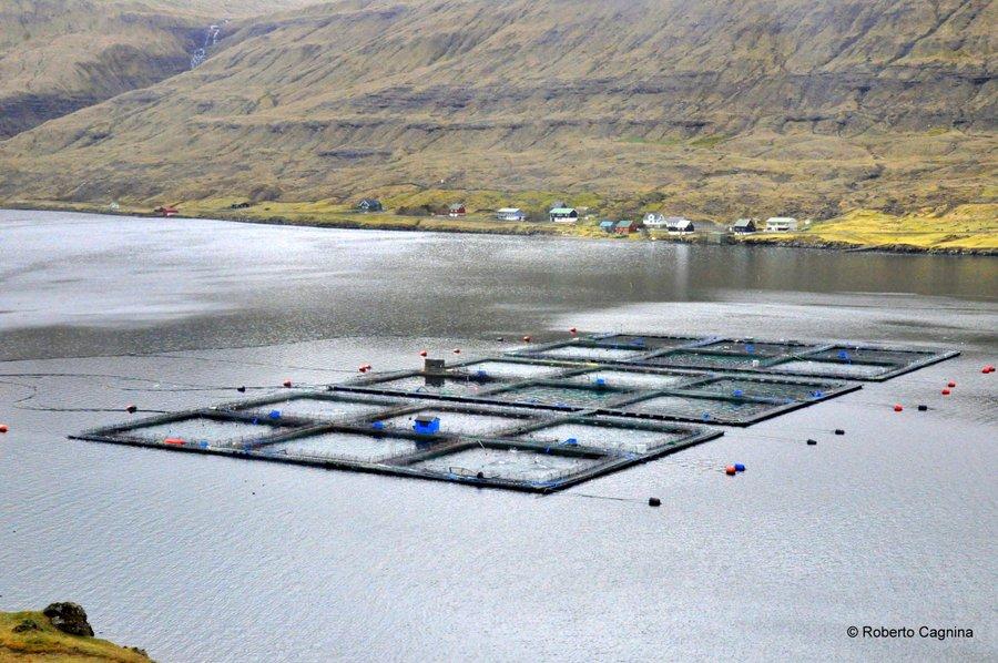paradiso alle isole faroe allevamenti di salmone