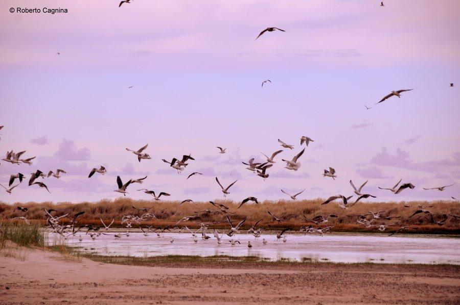 skagen danimarca mari si scontrano ma non si mischiano spiagge e lagune