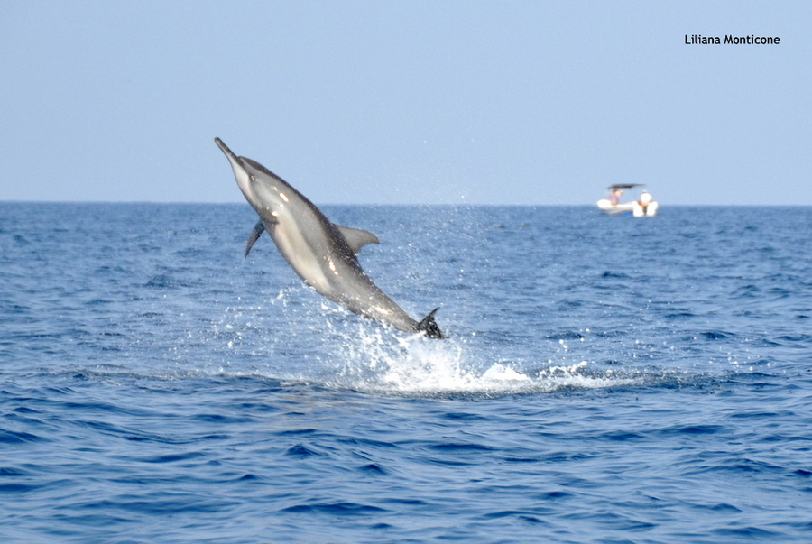 delfini sri lanka