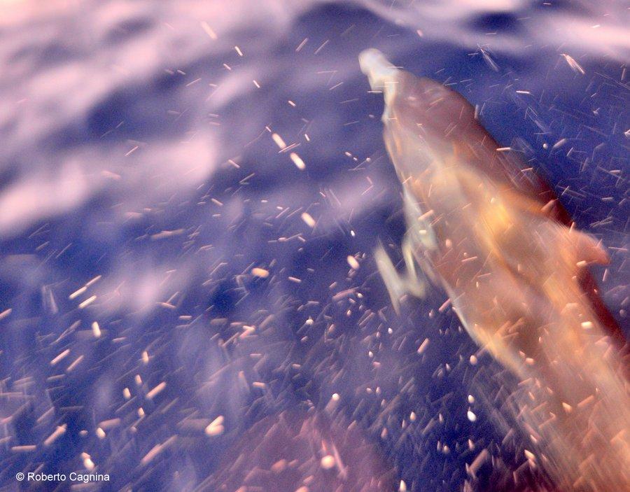 Consigli utili per organizzare un viaggio a Ibiza in barca si avvistano i delfini